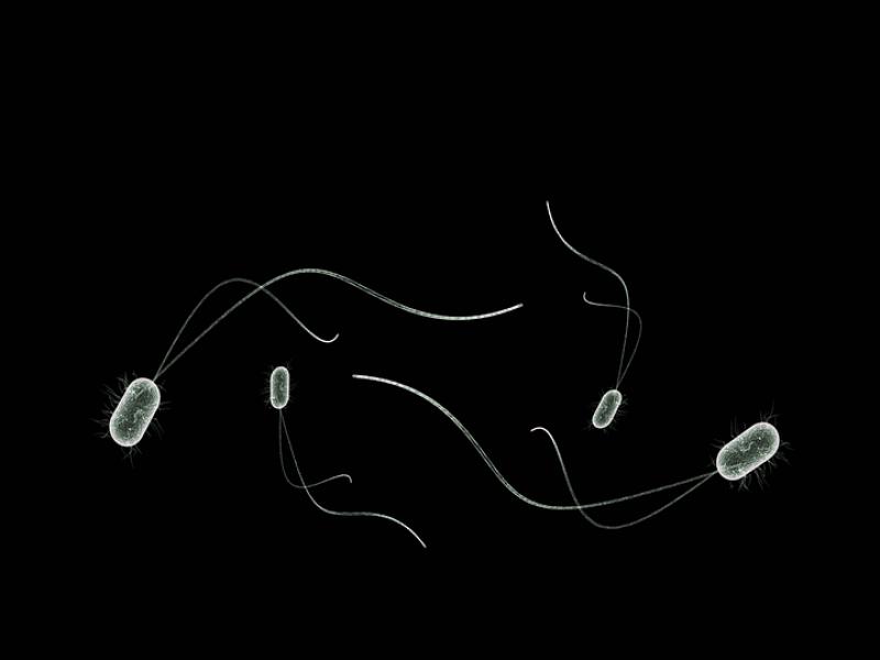 healthcare-health-microbes-bio-bacteria-1777339-1.png